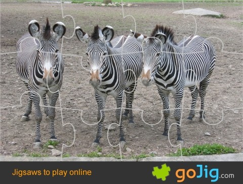 Jigsaw : Three Zebras
