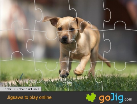 Jigsaw : Puppy in Motion