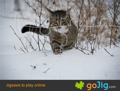 Jigsaw : Cat in Snow