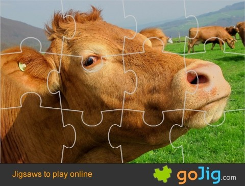 Jigsaw : Brown Cow