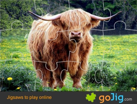 Jigsaw : Shaggy Cow