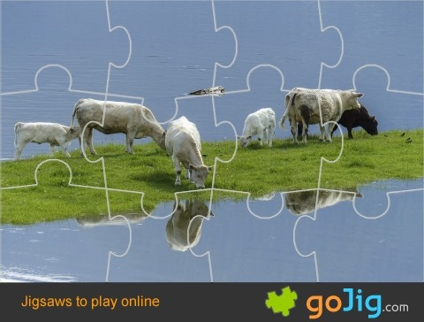 Jigsaw : Cows by Water