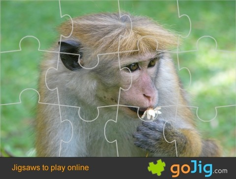 Jigsaw : Monkey with Bad Hair