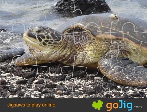 Jigsaw : Giant Sea Turtle