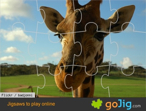 Jigsaw : Giraffe Up Close