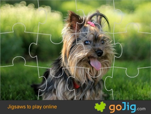 Jigsaw : Cute Terrier