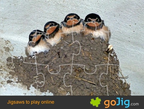 Jigsaw : Swallows