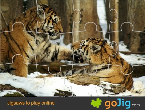Jigsaw : Tigers in Snow