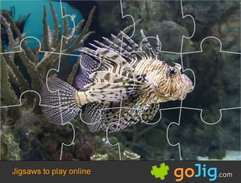 Jigsaw : Lion Fish