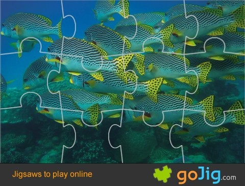 Jigsaw : Swarm of Fish on a Reef