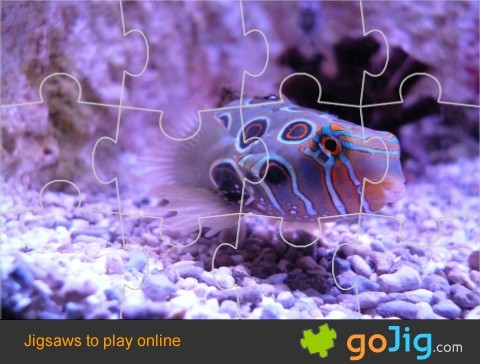 Jigsaw : Colorful Fish