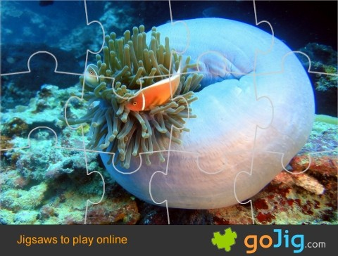 Jigsaw : Clown Fish Habitat