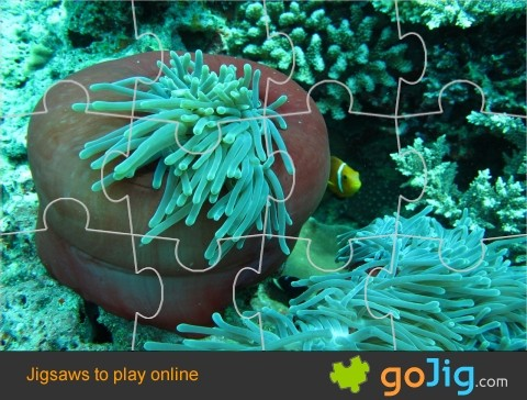 Jigsaw : Sea Anemone in Maldives