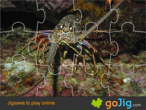 Jigsaw : Ocean Lobster