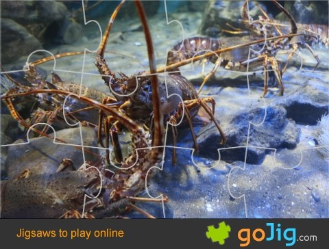 Jigsaw : Group of Lobsters