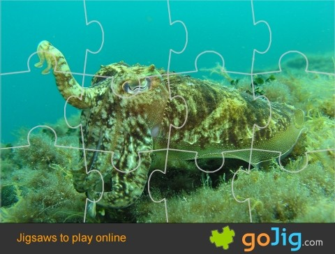 Jigsaw : Octopus Underwater