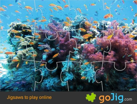 Jigsaw : Fish around Coral Reef