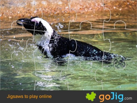 Jigsaw : Penguin In Water