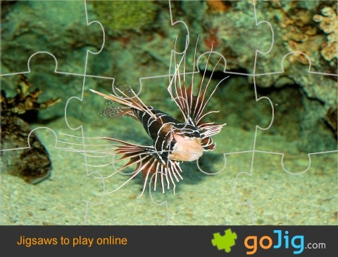 Jigsaw : Scorpion Fish