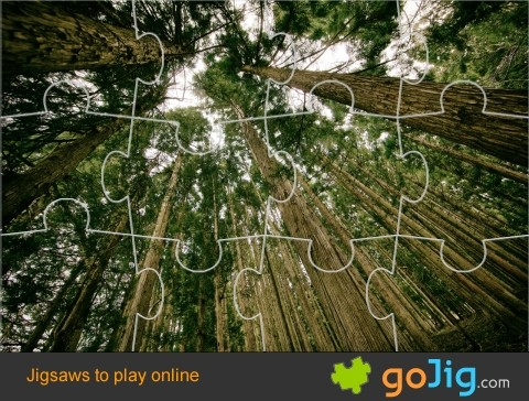 Jigsaw : Forest of Tall Trees