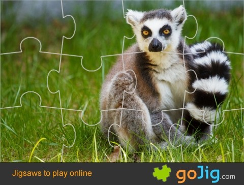 Jigsaw : Ring-tailed Lemur in Grass