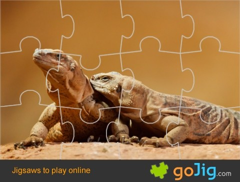 Jigsaw : Lizards On A Rock