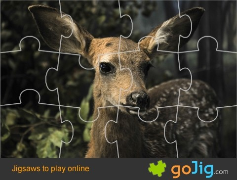 Jigsaw : Close Up Of A Deer