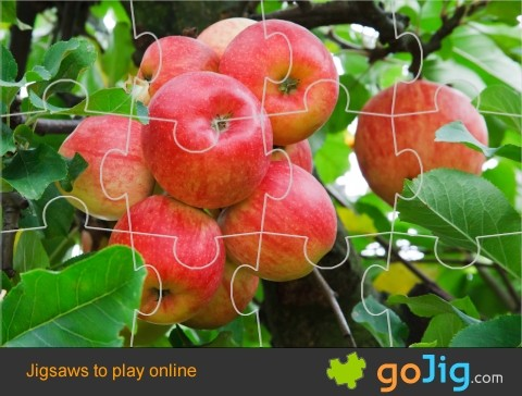Jigsaw : Red Apples On A Tree