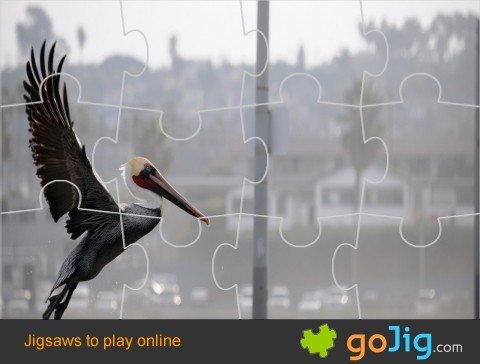 Jigsaw : Pelican Taking Flight