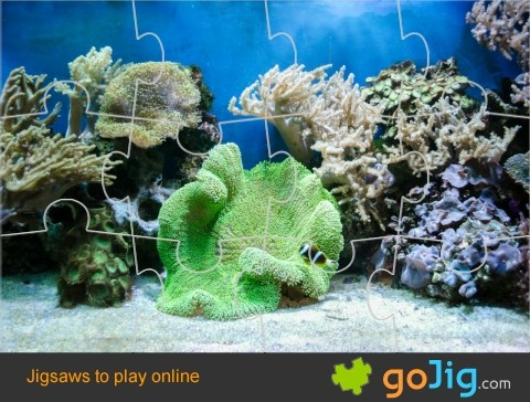 Jigsaw : Salt Water Aquarium