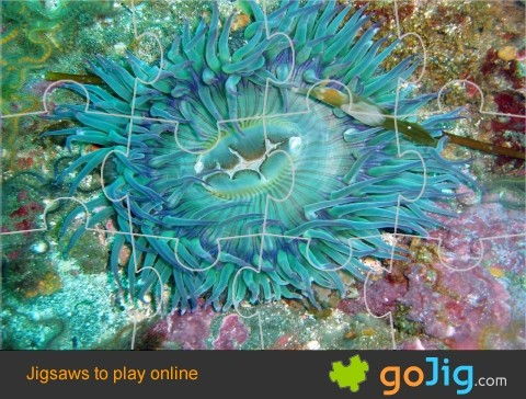 Jigsaw : Green Sea Anemone