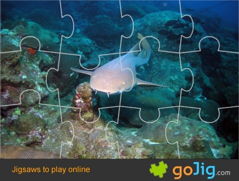 Jigsaw : Nurse Shark