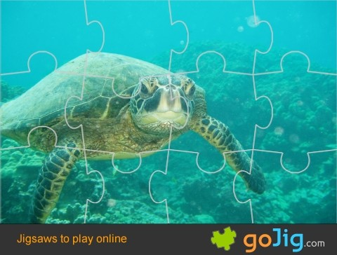 Jigsaw : Green Sea Turtle Swimming