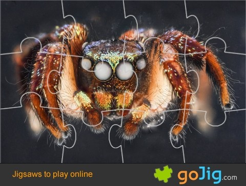 Jigsaw : Curvette Spider