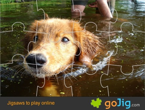 Jigsaw : Swimming Dog