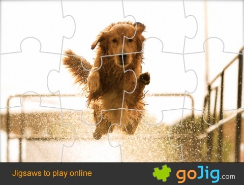 Jigsaw : Jumping Dog