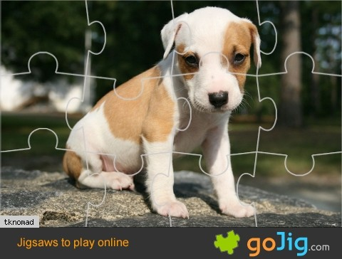 Jigsaw : Adorable Puppy