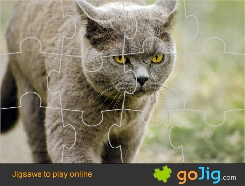 Jigsaw : Domestic Cat