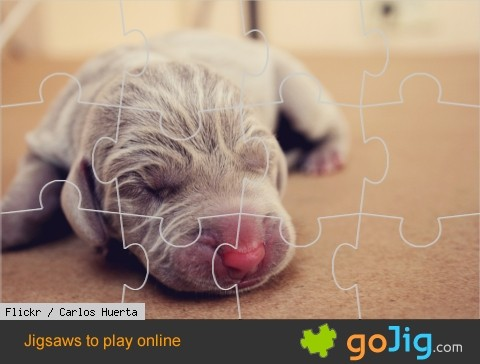 Jigsaw : Young Puppy