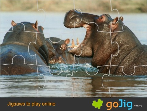 Jigsaw : Hippos in Water