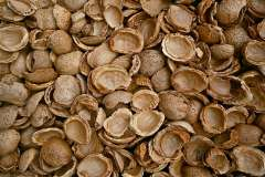Jigsaw : Almond Shells