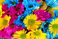 Jigsaw : Colourful Flowers